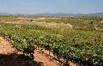 La Junta de Castilla y León constituye el Comité de Cooperativismo Agrario