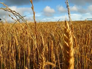 UPA-COAG reclama a la Consejería de Agricultura la inmediata convocatoria de pagos a zonas con limitaciones
