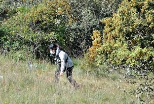 Científicos del CENIEH concluyen que la recolección de bellotas en los ecosistemas mediterráneos resultaba más eficaz