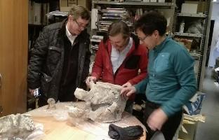 Evidencias encontradas determinan que los dinosaurios de Torrelara poseían vértebras con anomalías