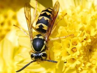 Tres personas mueren cada verano en Castilla y León por picaduras de abejas y avispas
