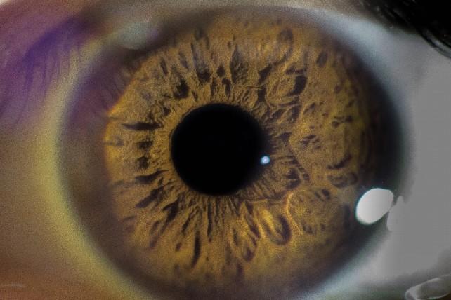globo-ocular-macro-ojo-pupila