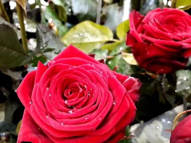 palacio-castilfale-flores-detalle-rosa-agua