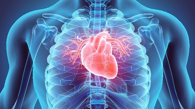 corazon-cardiovascular