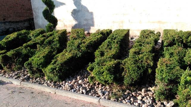 foto-denuncia-jardines-cayuela