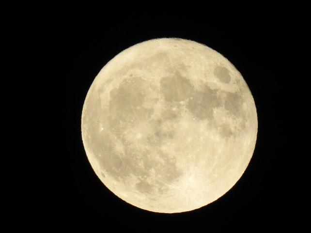 luna-cris