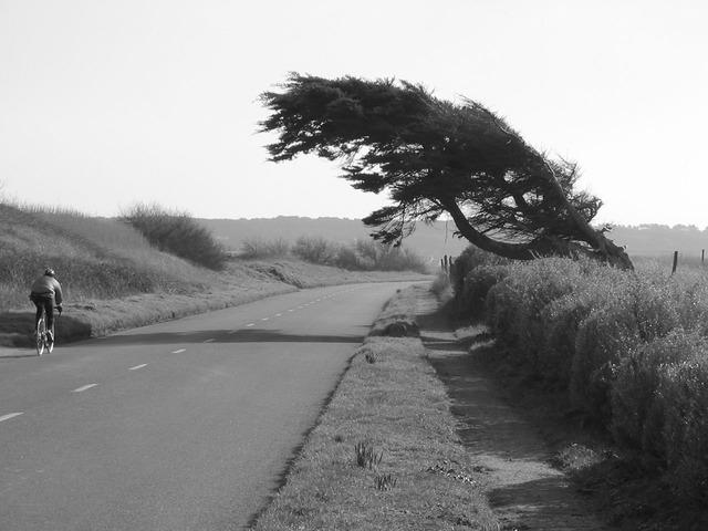 viento-junta
