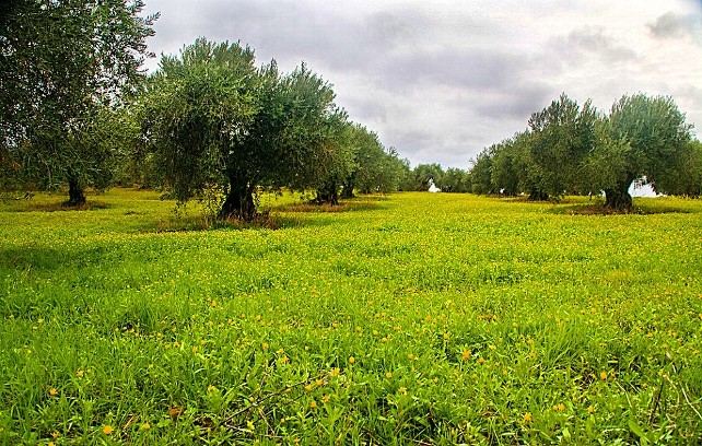 campo-verde