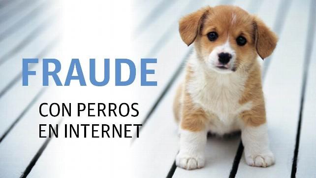 perro-fraude-compra