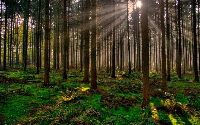 bosque-forestal-arbol