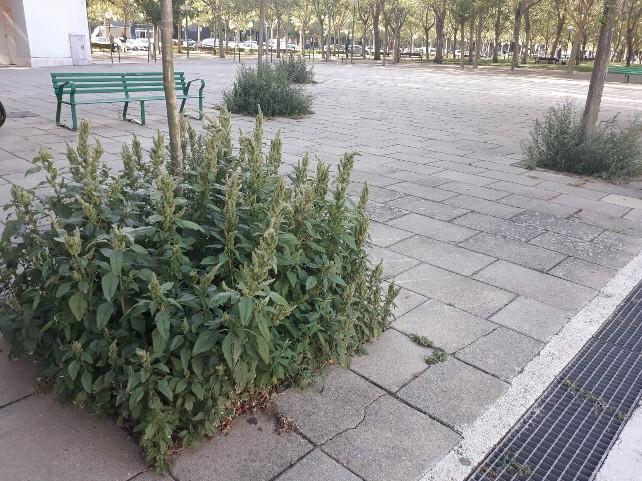 denuncia-arbol-hierbas