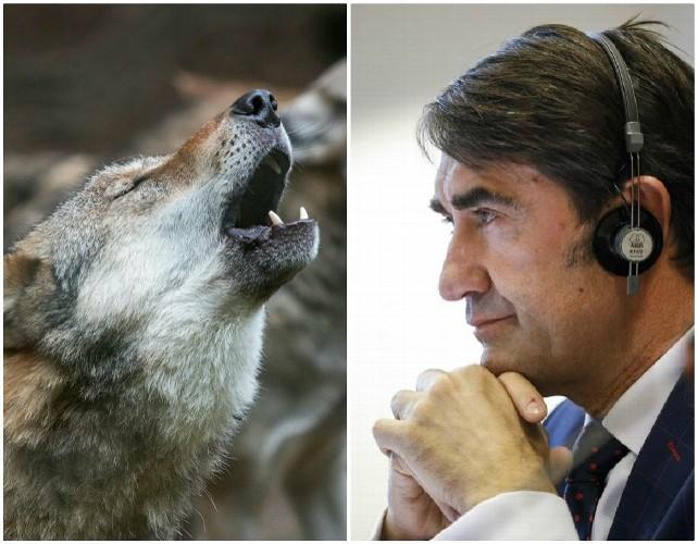 lobo-suarez