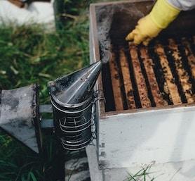 ahumadores-apicultura