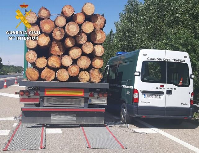 camion troncos