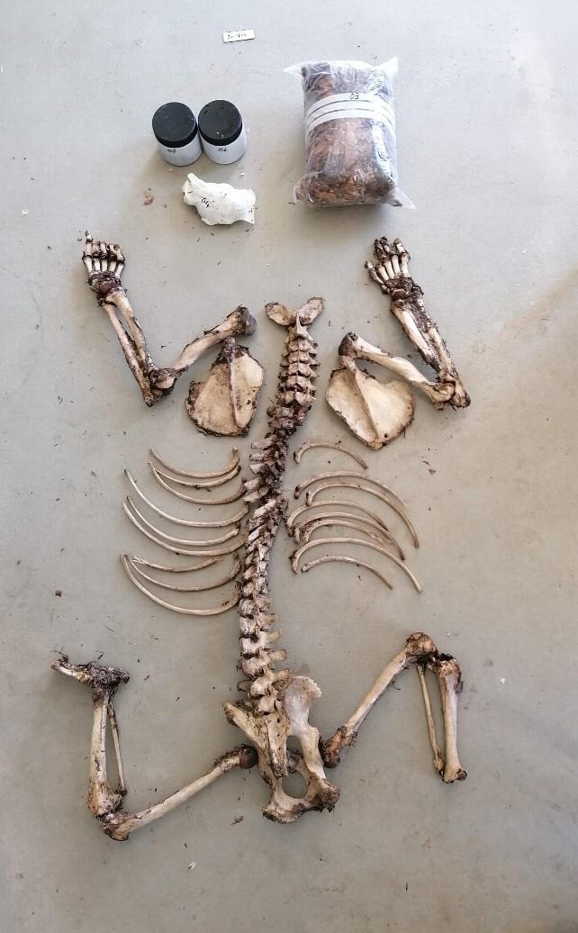 huesos-oso2