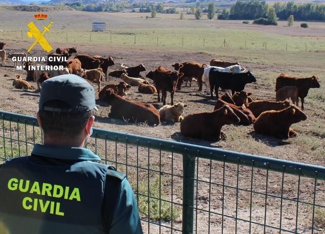 suceso vacas