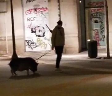 joven-pasea-cerdo-burgos