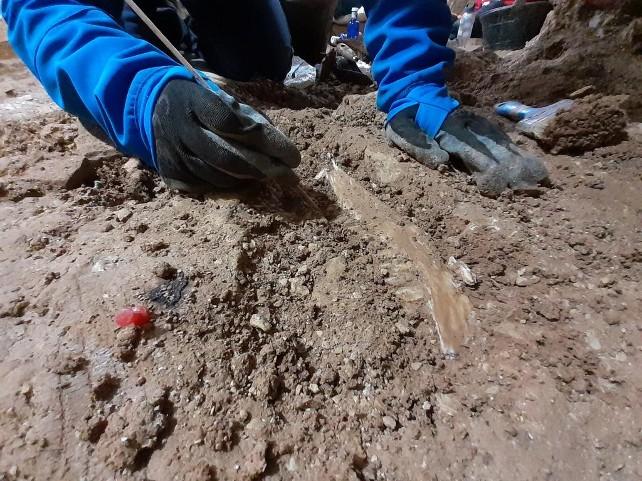 excavacion-manidibula-cerdo