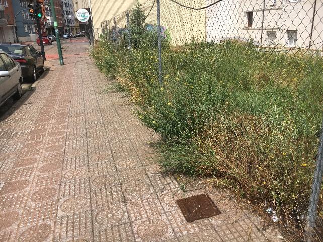 denuncia hierbas